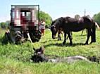 Anzeige: Landwirt zieht Pferd am Hals aus Riedgraben
