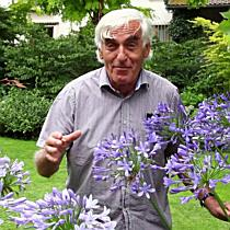 Die Schmucklilie im VOL.AT-Gartentipp