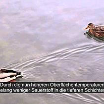 Bodensee so warm wie noch nie im Februar