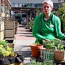 Der BayWa-Gartentipp auf VOL.AT: Der Kräutergarten