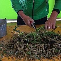 Tipps zum Kompostieren