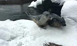 Zootiere feiern ersten Schnee