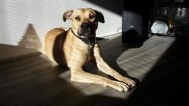 Hunde vom TSV-Rankweil