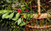 Zauberhafte Waldweihnacht in Laterns