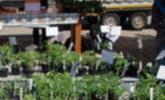 ARCHE NOAH Jungpflanzenmarkt