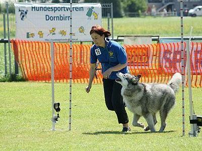 Kürzlich fand das erste Breitensportturnier des Hundsportvereins Dornbirn statt.