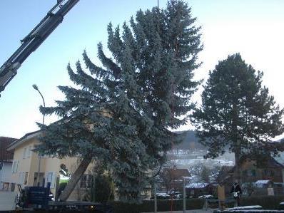 Verladung und Abtransport des Baumes