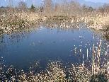Das Biotop Paspels Brederis liegt gegenüber dem Badesee Paspels.