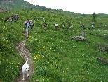 Lexlupo auf Wanderung durch die Bregenzerwälder Bergwelt