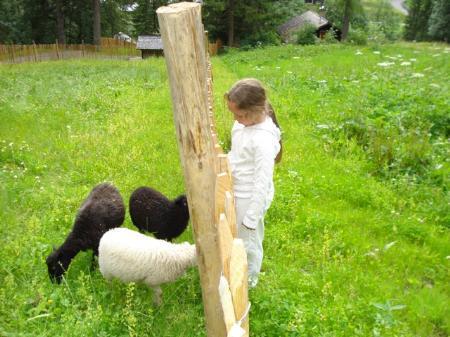Mit Tieren in Begegnung. Celine liebt die kleinen Schafe.