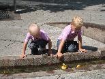 Welche Ente gewinnt in diesem Sommer?
