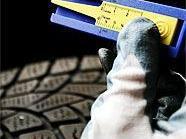 36 Reifen wurden auf Herz und Nieren geprüft.