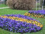 Attraktive Blumenrabatte