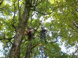Baumpflegemaßnahmen im Lochauer Schwarzbad
