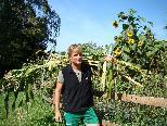 Biobauer Erich Moosbrugger beginnt jetzt mit der Riebelmaisernte.