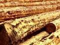 Das Servitutsholz kann bald wieder auf der Gemeinde abgeholt werden!