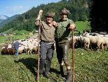 Die Hirten von der Alpe Schadona brachten ihre Herde sicher ins Tal