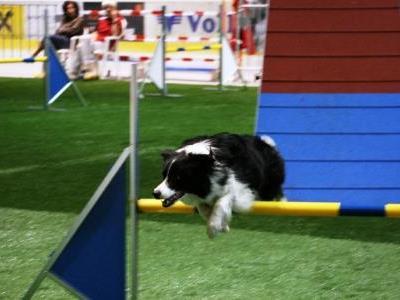 Die agilsten Hunde der Welt kämpften in der Messehalle um den Siegerpokal.