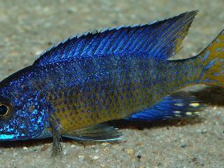 Gewinnen sie einen Einblick in die Aquaristik, Fischhaltung und die Pflege