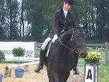 Harmonie zwischen Reiter und Pferd