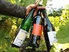 Interessante Weine - von alten Rebsorten hin zu moderner Weinbaukultur.
