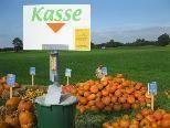 Kürbiszeit im ganzen Land, so auch am Straßenrand zwischen Lustenau und Hohenems