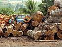 Entwaldung soll bis 2020 gestoppt werden