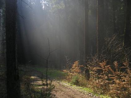 Licht ins Dunkel 2009