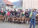 Stolze Ziegenzüchter präsentierten ihre Lieblinge