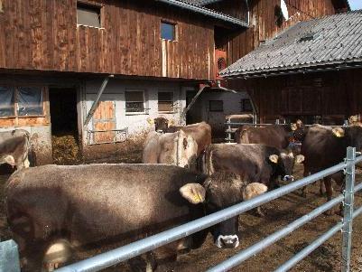 700 Kilowatt/h pro Rindvieh muss man in einem Jahr rechnen