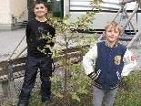 Das SPZ freut sich über einen eigens gepflanzten Maronibaum im Pausenhof