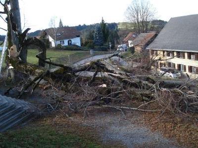 Innert weniger Tage wurde das Naturdenkmal gefällt. (Foto: Bauhof Möggers)