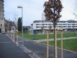 Baumpflanzung im Mariahilfer Park