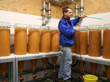 Im Landesfischereizentrum betreut Reinhard Bachmann rund 50 Millionen abgelieferte Felcheneier.