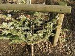 Der Gemeindebauhof holt und entsorgt wieder gebrauchte Christbäume