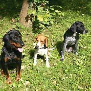 Andor, Jolly und Jackson