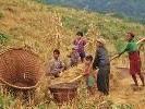 Hochlandwirtschaft in Bolivien
