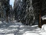 Zauberhafte Winterlandschaft auf dem Pfänder.