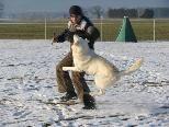 Bereits vergangenen Januar fanden bei Schnee Trainings für Hunde in Nofels statt.