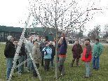 Der Obst- und Gartenbauverein Koblach sorgt für den passenden Baumschnitt