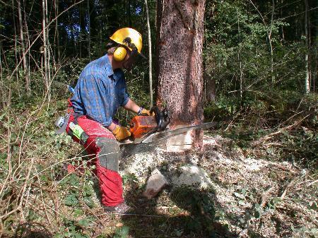Holzen als Hobby.(Quelle: www.sicheregemeinden.at)