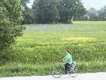 Bild: Ein Highlight der Radwanderung durch die Noflerau ist die Iriswiese im Unterried.