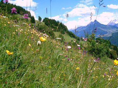 Günter Bischof lädt ein zur botanischen Wanderung.