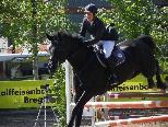 Hervorragende Leistungen von Reiter und Pferd