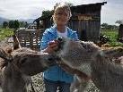 Renate Burda mit ihren Eseldamen.