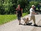Fußgänger schneidet Hundeführer mit Hund