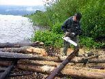 Angeschwemmtes Holz wird verarbeitet