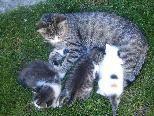 Bella mit ihren Jungs