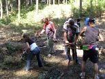 """""""Carla Arbeitsprojekt"""" der Caritas Vorarlberg: Waldpflege"""