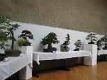 Die Besucher waren von den verschiedenen Bonsai Bäumchen fasziniert